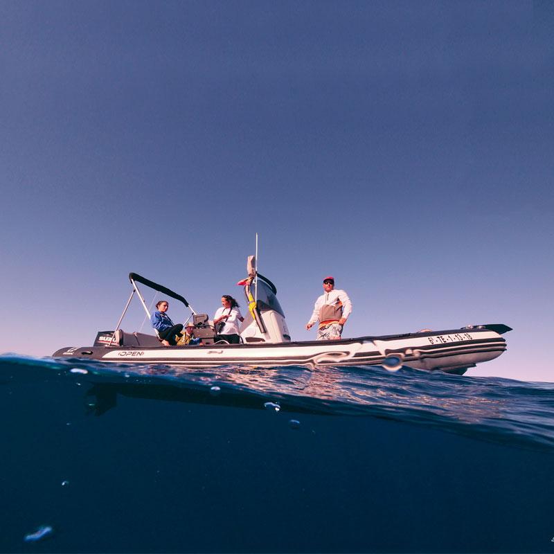 Avistamiento de Cetáceos en su medio natural en Tenerife Sur